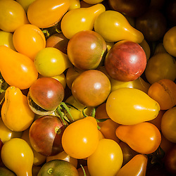 Cherry tomatoes recently picked at Garrison-Trotter farm in the Dorchester neighborhood of Boston, Massachusetts.