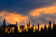 Trees at sunset in the Northern Rocky Mountains<br />