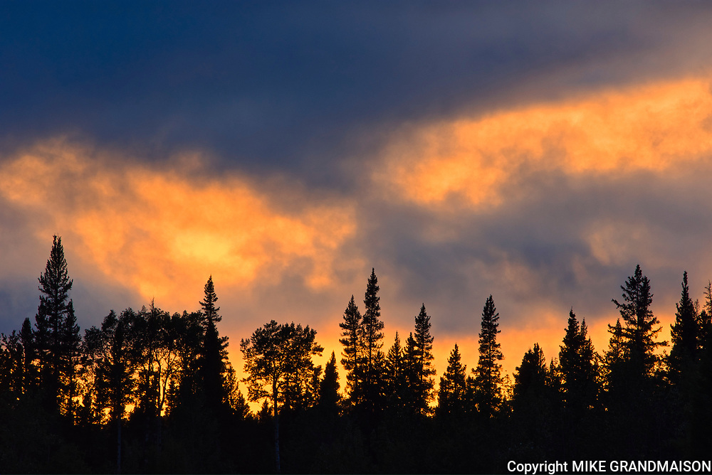 Trees at sunset in the Northern Rocky Mountains<br />Liard River Hot Springs Provincial Park<br />British Columbia<br />Canada