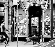 Common scene of man walking dog at night in Greenwich Village, New York City, at night. The dog is centered on the entrance door of a lamp store. Bright highlight on dog's leash. All lamps inside are on illuminating the store in a very dramatic way. Tiffany-style lamp on tall table inside entrance. The awning is brightly lit also. Dog vigorously pulling man ahead.