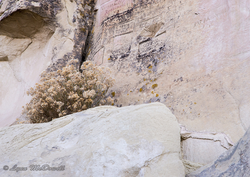 Contrast of ancient rock and soft flowers - El Morrow New Mexico