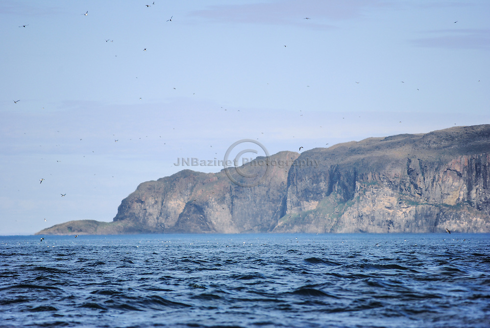 Ivujivik, Qc. This picture was taken from a Canoe on the Digges sound, looking towards Digges Island. A large colony of Murres is seen bathing in the water and flying about.