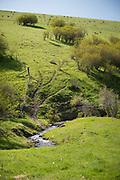 Heifer Creek