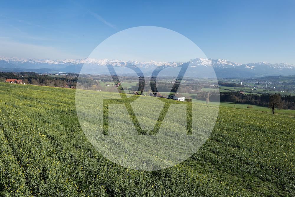 SCHWEIZ - HILDISRIEDEN - Blick auf die Innerschweizer Alpen, im Vordergrund ein Rapsfeld - 10. April 2016 © Raphael Hünerfauth - http://huenerfauth.ch