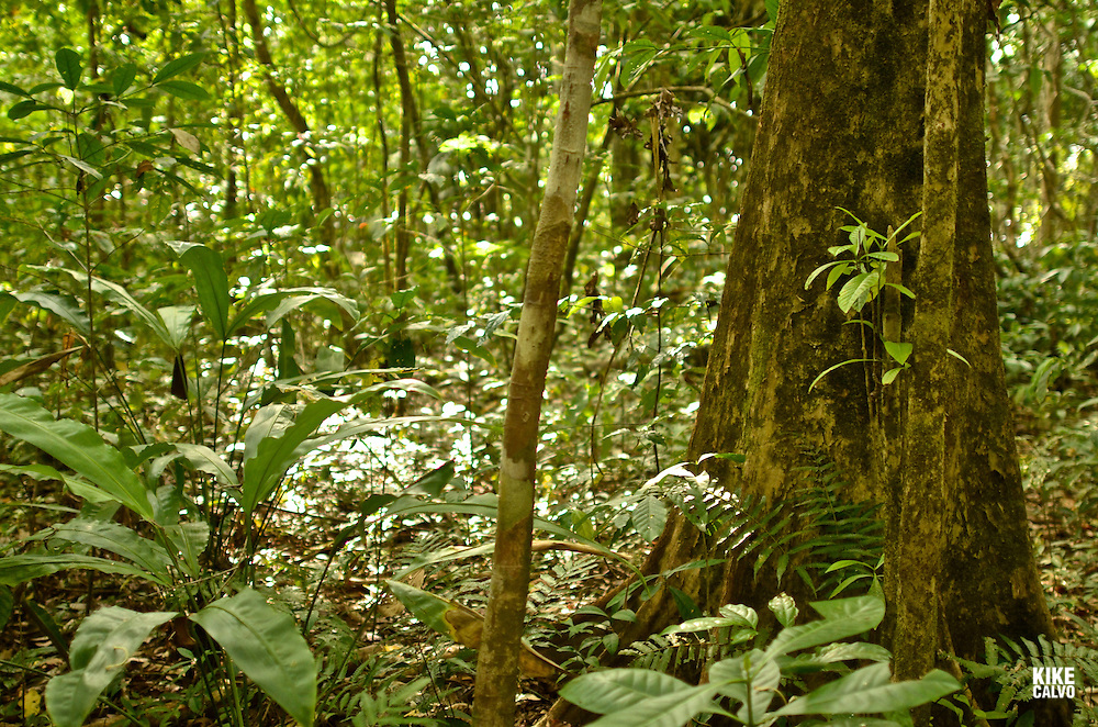 Corcovado National Park   The park conserves the largest primary forest on the American Pacific coastline and one of the few remaining sizable areas of lowland tropical rainforests in the world.
