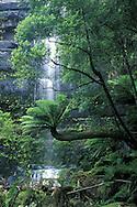 Russell Falls.Mt. Field National Park.Tasmania.Australia