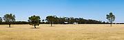 Dry pasture paddock landscape in rural Victoria, Australia.
