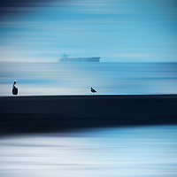 The smooth-drawn waters of the Pacific with a ship on the horizon and water birds on a breakwater.