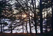 Picture shows woods around L&ouml;kholmen, West Sweden, 23rd December 2013<br /> <br /> Credit should read: Picture by Mark Larner