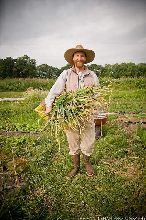 Josh harvests garlic.