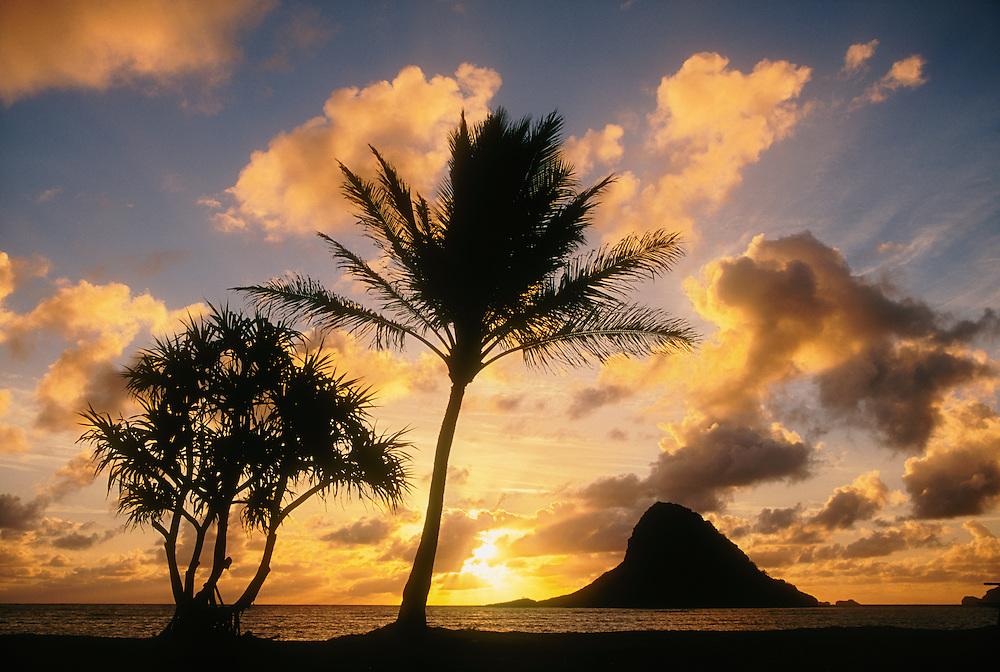 "Sunrise and Mokoli'i Island (""Chinaman's Hat""), with lauhala (Pandanus) tree and coconut palm; Kualoa County Beach Park, Windward Oahu, Hawaii."