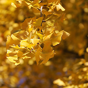 """On Our Golden Day"" <br />