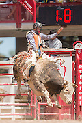 Bull rider Dalan Duncan holds on to Swamp Sauce at the Cheyenne Frontier Days rodeo at Frontier Park Arena July 24, 2015 in Cheyenne, Wyoming. Frontier Days celebrates the cowboy traditions of the west with a rodeo, parade and fair.