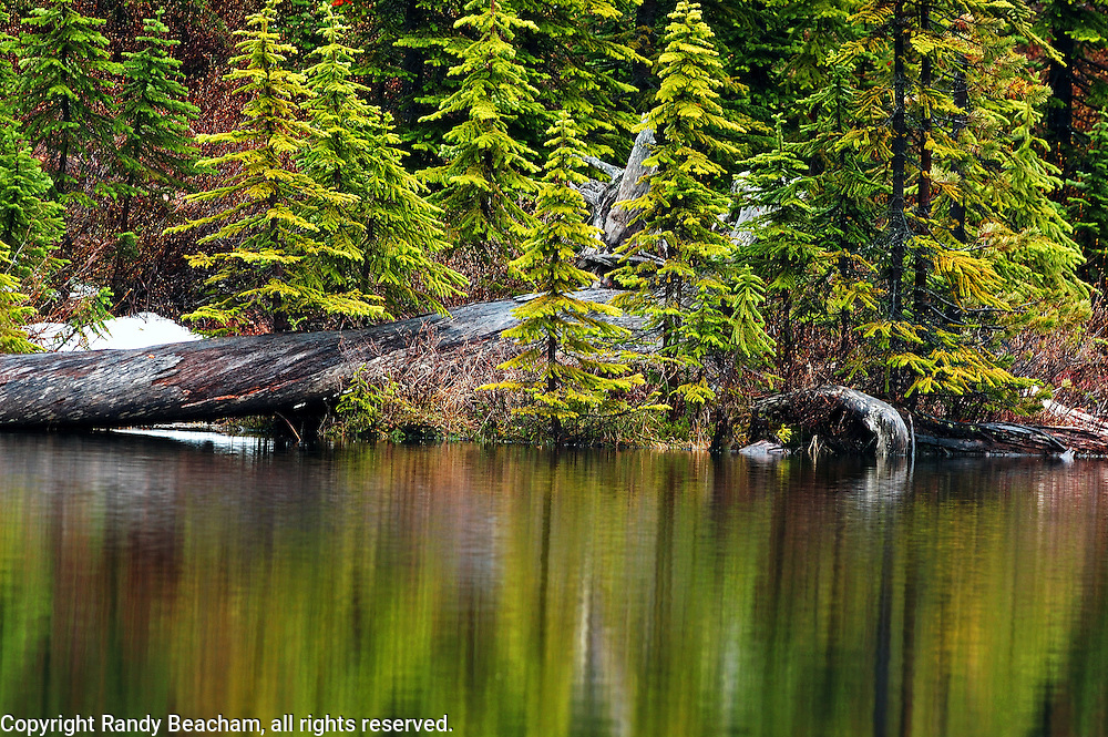 Moose pond and conifers. Northwest Peak Scenic Area in the Purcell Mountains, Montana