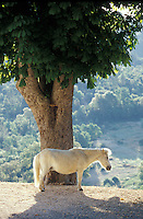 a white horse - photograph by Owen Franken