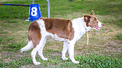 Adestramento de cães na 39º Expointer - Exposição Internacional de Animais, Máquinas, Implementos e Produtos Agropecuários. FOTO: Alessandra Bruny / Agência Preview