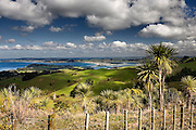 looking down on omaha beach, the new zealand coast and surrounding rural scene of green hills, cabbage trees and wire fence, omaha, rodney district, new zealand