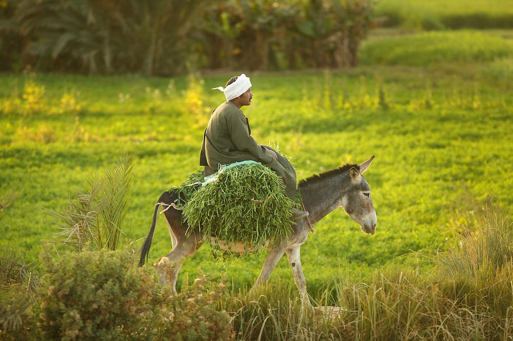 Togreise gjennom Nildalen, livet på jordene.