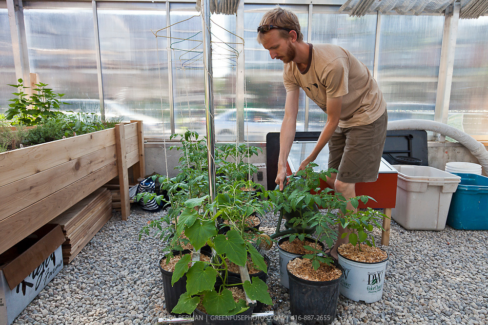 FoodShare's greenhouse of edible plants in raised planters.