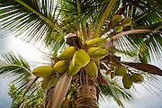 Hookena, Big Island of Hawaii