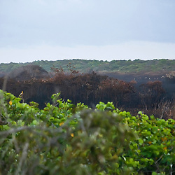 """Incêndio no Brejo Herbáceo do PEPCV (Paisagem) fotografado em Guarapari, Espírito Santo -  Sudeste do Brasil. Bioma Mata Atlântica. Registro feito em 2008.<br /> <br /> <br /> <br /> ENGLISH: Fire in the PEPCV Herbaceous Mouth  photographed in Guarapari, Espírito Santo - Southeast of Brazil. Atlantic Forest Biome. Picture made in 2008."""