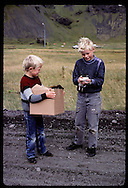 Boy lets puffin chick bite finger as pal waits w/ box of birds on way to free them @ shore;Heimaey Iceland