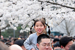 March 24, 2019 - Nanjing, Nanjing, China - Nanjing,CHINA-Numerous tourists flock to Jiming Temple to enjoy cherry blossoms in Nanjing, east China's Jiangsu Province. (Credit Image: © SIPA Asia via ZUMA Wire)