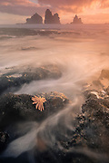 A solo Reef Starfish catches the last warm rays of the setting sun, at Motukiekie Beach, New Zealand.