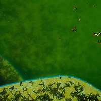 TAMPA, FL -- March 22, 2011 -- Green water is seen in a pool at a vacant home in North Port, Fla., 2011.  A recent study showed that one and five homes in the state of Florida is vacant.