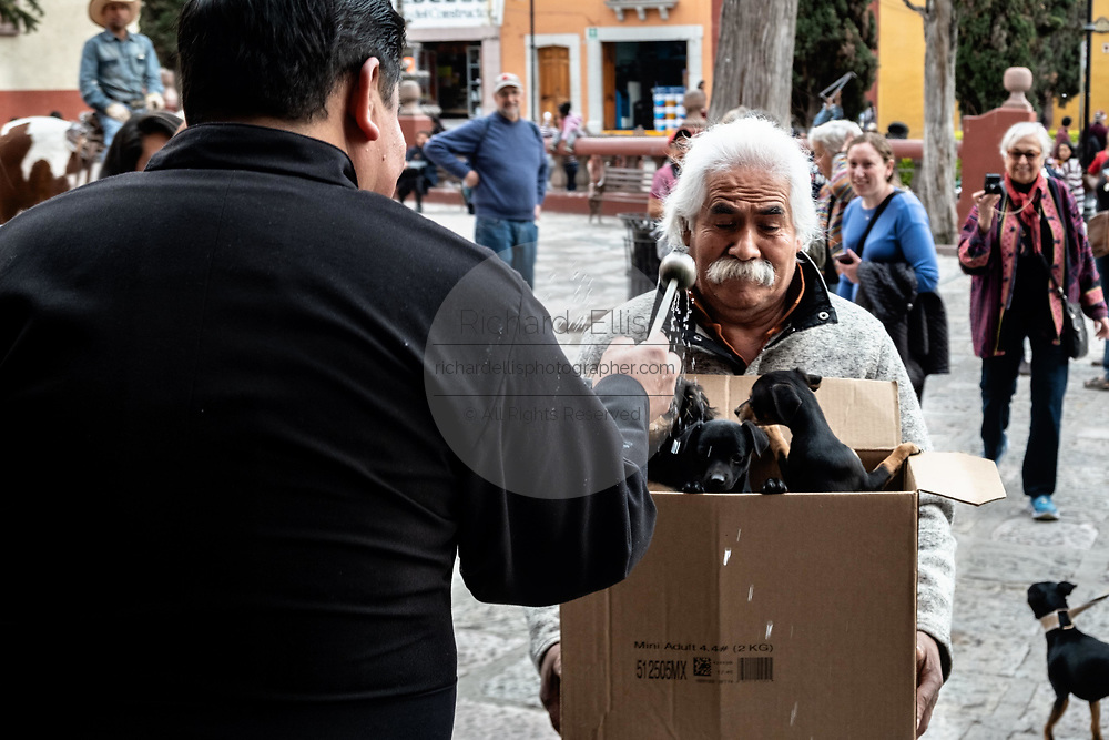 A Roman Catholic priest blesses a box of puppies during the annual blessing of the animals on the feast day of San Antonio Abad at Oratorio de San Felipe Neri church in the historic center of San Miguel de Allende, Guanajuato, Mexico.