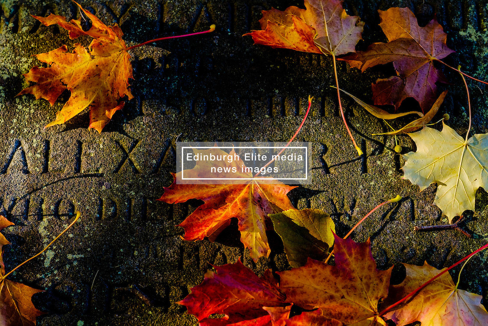 Autumn leaves lying on an old gravestone at Melrose Abbey, Melrose. Scottish Borders<br /> <br /> (c) Andrew Wilson | Edinburgh Elite media