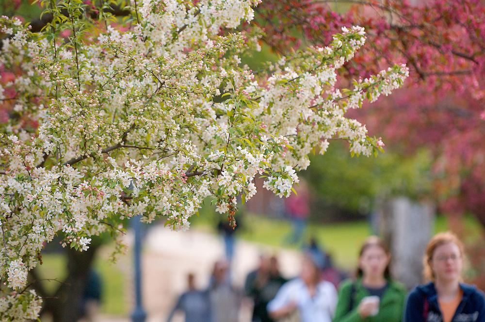18165Campus Students Spring: Emeriti Park