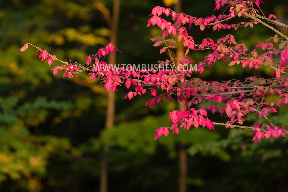 Middletown, New York  - Autumn scenes on Oct. 10, 2015.