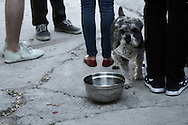 dog at a backyard party, highland park, los angeles