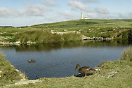 Rocket Pole pond, Lundy, Devon