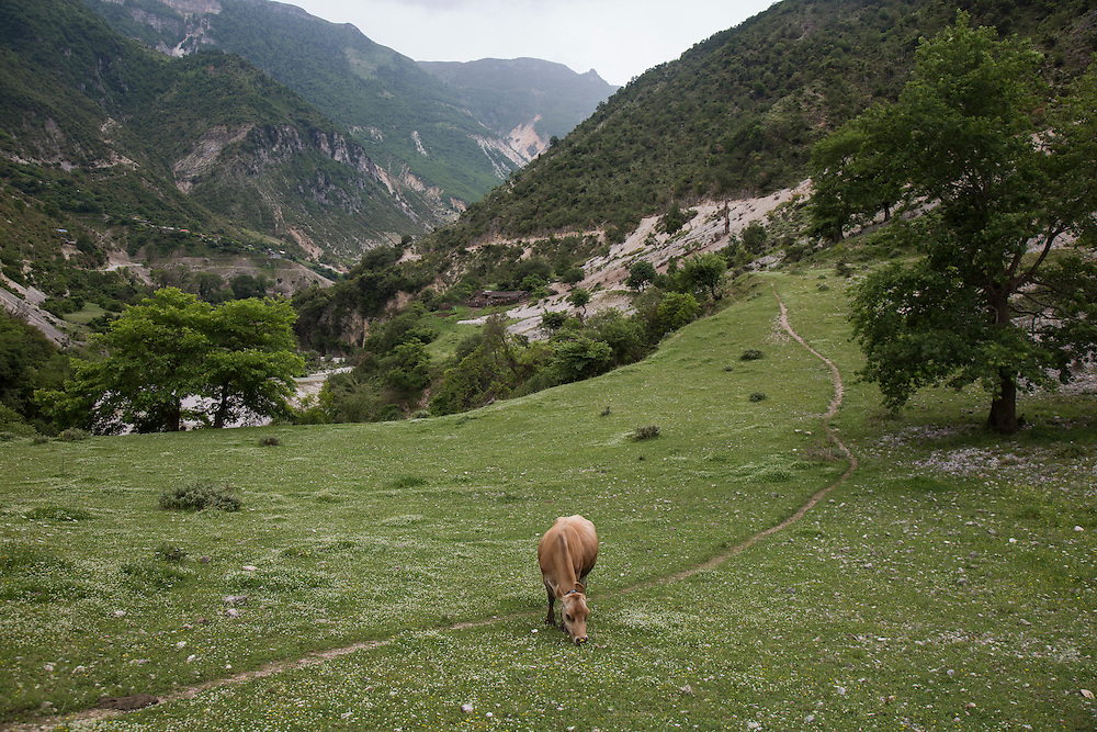 A cow feeds above the Bancha. The river provides water to the village of Bancha and its livestock. Rok Rozman, the organizer of the tour, says that if the hydropower project goes through the small stream will disappear, since all of its flow is barely enough to run a turbine. The cow is grazing in a field just opposite the Ali Pasha Aqueduct in the Bence valley. The aqueduct was built during the reign of the Ottoman pashalik sometime in the late 1700s or early 1800s and speaks to the long history of people and water in the area.