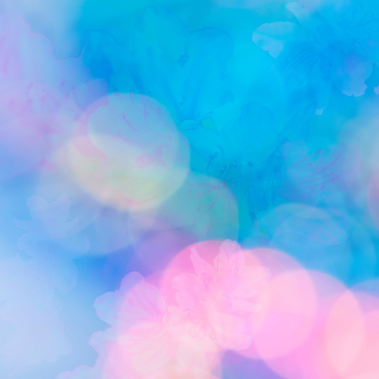 Blue pink and turquoise pastel abstract background with circles of light anf azealea flowers symbolizing energy love and joy
