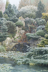 The frozen pond and rock garden with mixed conifers in John Massey's garden in winter. Design: John Massey, Ashwood Nurseries