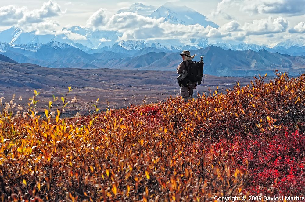 Lone Photographer Viewing Denali. Image taken with a Nikon D3 and 80-400 mm VR lens (ISO 1600, 80 mm, f/16, 1/250 sec). GPS Location (N63.431 W-150.304)