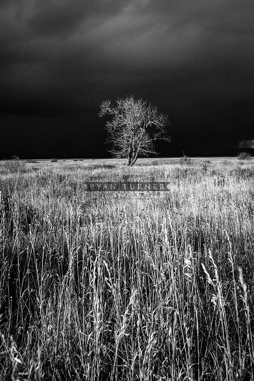 A lone tree glows in the forground of a dark stormy sky in southwest Montana.