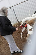 One of NJGAP's long-time volunteers does a two-step with TANGO TESSIE from  NJGAP's December 2009 Adoption Intake.