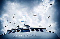 View of birds flying in the cloudy sky from a ship on the Sognefjord in Norway