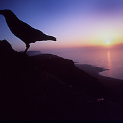 "A raven finds a perch on the northern tip of Lanzarote. .TheSpanish island, is the easternmost of the Canary Islands, in the Atlantic Ocean, approximately 125 km off the coast of Africa and 1,000 km from the Iberian Peninsula. Covering 845.9 km, it stands as the fourth largest of the islands. The first recorded name for the island, given by Angelino Dulcert, was Insula de Lanzarotus Marocelus, after the Genoese navigator Lancelotto Malocello, from which the modern name is derived. The island's name in the native Guanche language was Tite-Roy-Gatra, which may mean ""the red mountains""."