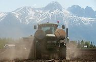 Matanuska Valley farmer Ben Vanderweele plants potatoes in a field off Outer Springer Loop near Palmer, Alaska, on Friday, May 27, 2011.