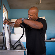 AUGUST 27, 2018--VIEQUES---PUERTO RICO--<br /> Fisherman Jorge Cruz Hernandez, 37, cleans tuna fish in his garage fish work area. Cruz supplies local restaurants with lobster and fish.<br /> (Photo by Angel Valentin/Freelance)