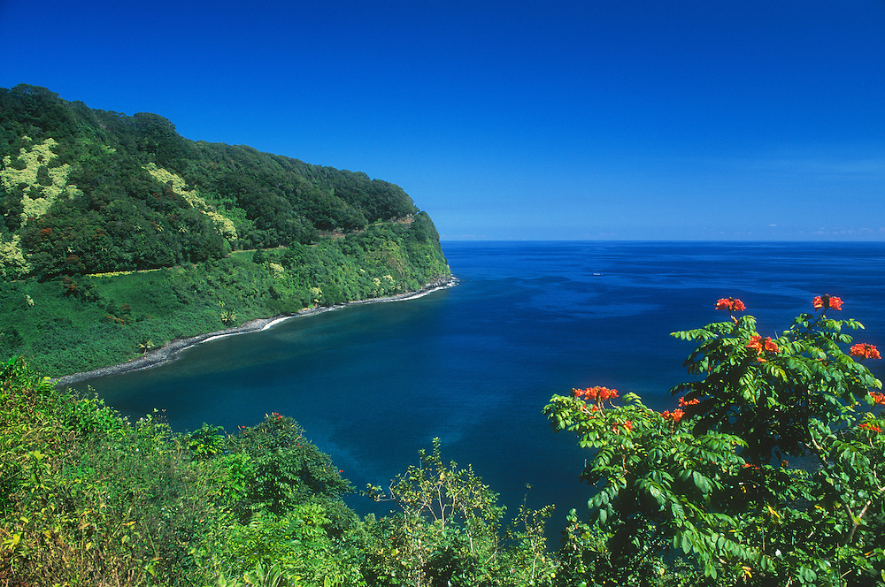 Honomanu Bay and the Hana Highway, with African Tulip Tree blooming in foreground; Hana Coast, Maui, Hawaii.