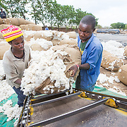 CAPTION: Loading the conveyor belt that takes sacks of raw cotton, as received from the market, to a truck or trailer for weighing and then into the ginnery for processing. LOCATION: Great Lakes Ginnery, Mgabu, Chikwawa, Malawi. INDIVIDUAL(S) PHOTOGRAPHED: Juli Jesadi (left) and Richard Chimkango (right).