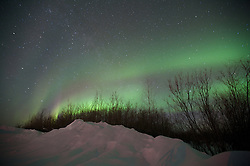 The northern lights above a snow bank and trees in the Arctic Circle.