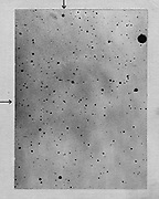 Long exposure of star field showing track of the asteroid (planetoid) Sappho against points of stars. Photograph by Max Wolf of Heidelberg 21 March 1892. Negative not converted to positive to avoid any loss of detail.
