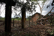 The remains of what was once a tyre factory at Km 33 of Yangambi Research Station, in Yangambi, DR Congo, on Sunday, Dec. 7, 2008. Km 33 marks furthest outpost of Yamgambi. It was once a rubber plantation and the factory here, which predates the research station, produced tyres for the whole of Congo and for export around the world.